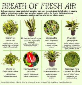 breath of fresh air 2
